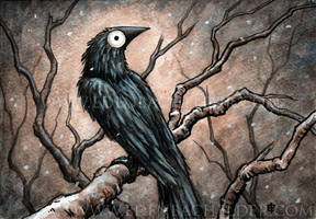 Black Bird Watercolour VII by shmeeden