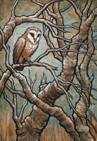 Little Owl ink and watercolour by shmeeden
