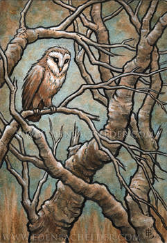 Little Owl ink and watercolour