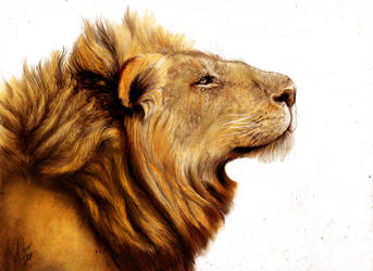 Lion head study traditional chalk painting