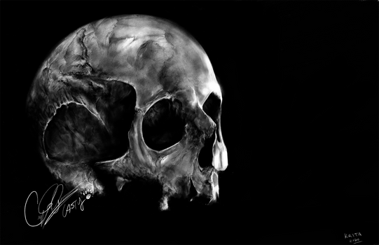 Digital Charcoal Skull study - Krita [Casty]