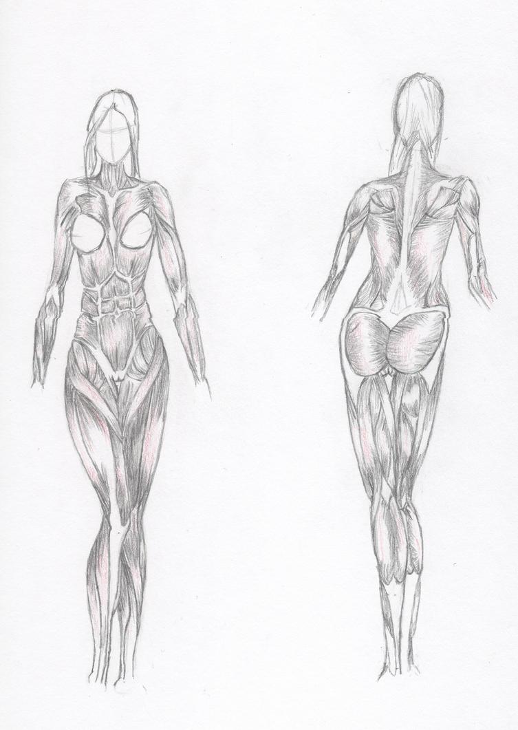 Study Of Female Anatomy Muscles By Goodfella Inc On Deviantart