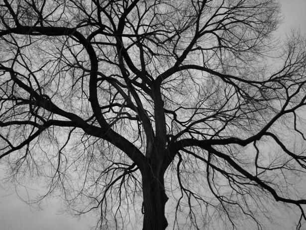 Tree 2 by JESSFRENZY