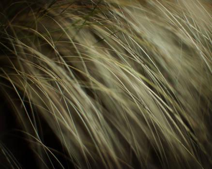 Grass Strings