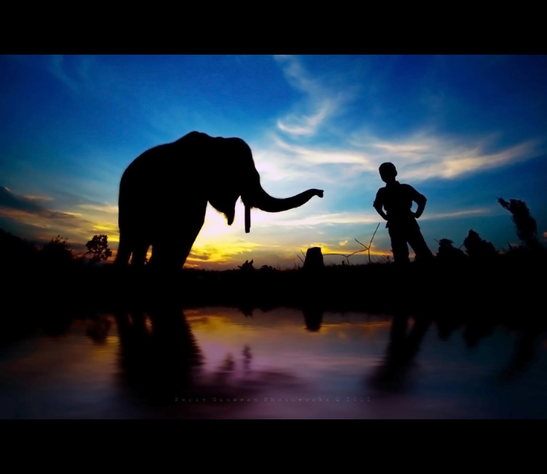 Elephant Boy by perigunawan