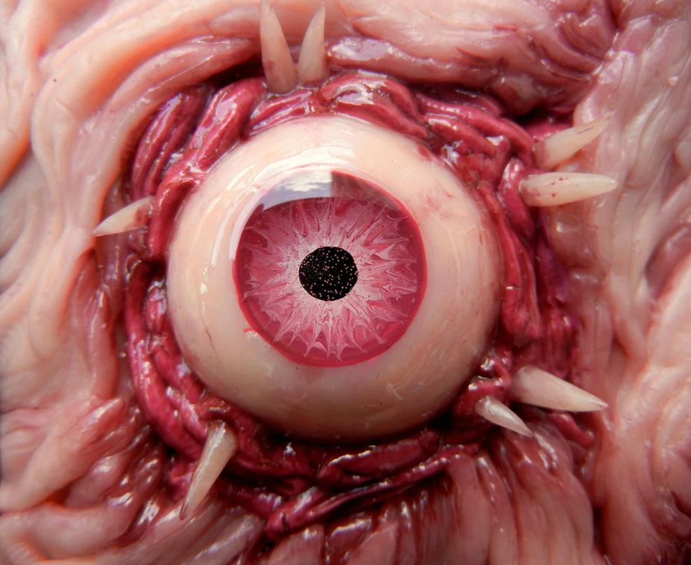 Dog Eye Super Close Up