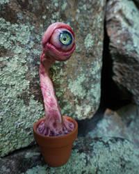 little potted eye ball