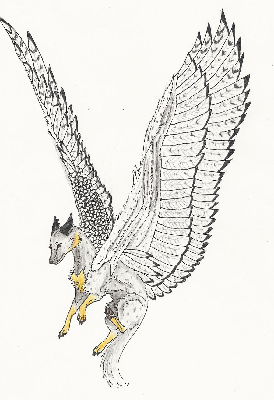 Owl Wings Drawing | www.imgkid.com - The Image Kid Has It!