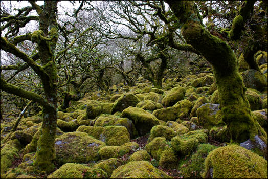 the churning sea of rocks and moss
