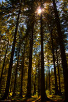 Piercing the canopy by LawrenceCornellPhoto