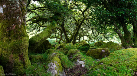 Cloaked in moss by LawrenceCornellPhoto