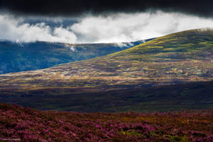 Sparkling heather by LawrenceCornellPhoto