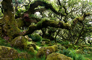 The ancient wood