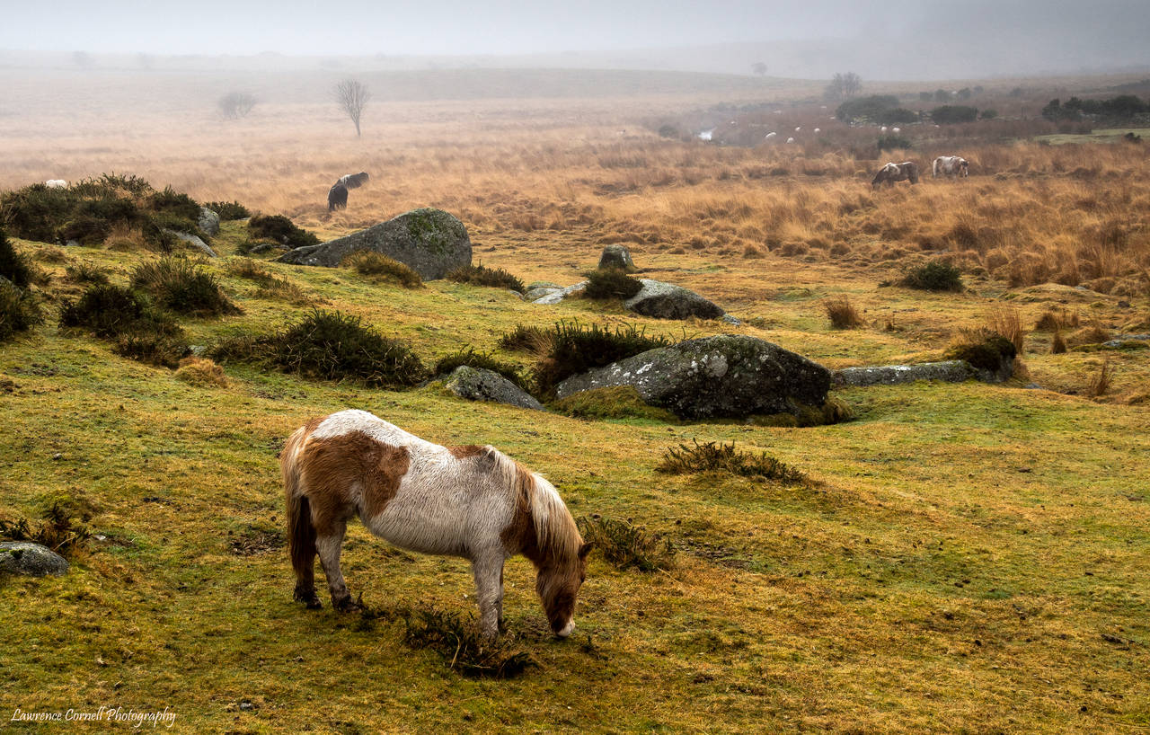 The misty moor by LordLJCornellPhotos