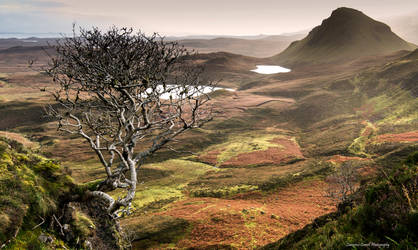 The Trotternish tree by LawrenceCornellPhoto