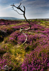 Dancing on the moor by LawrenceCornellPhoto