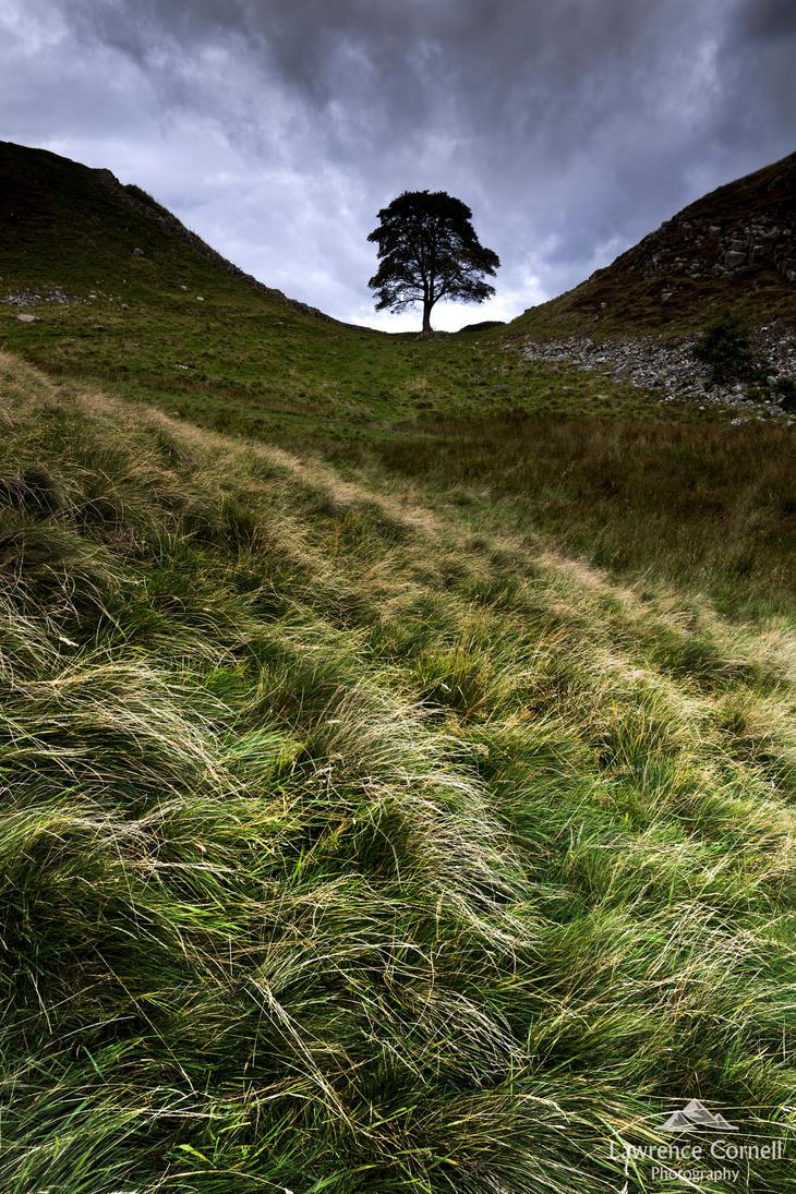 A lone tree. by LordLJCornellPhotos