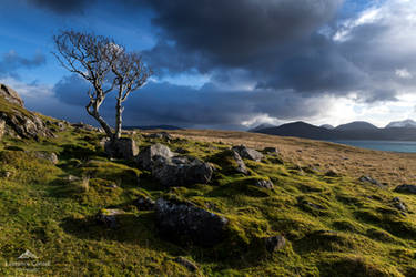 The lonely tree by LawrenceCornellPhoto