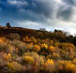A blaze of autumn.