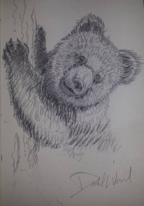 Black Bear Cub by ArtworkbyDanielWard