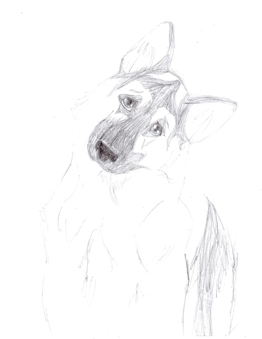 Confused German Shepherd by FieryCreator on DeviantArt