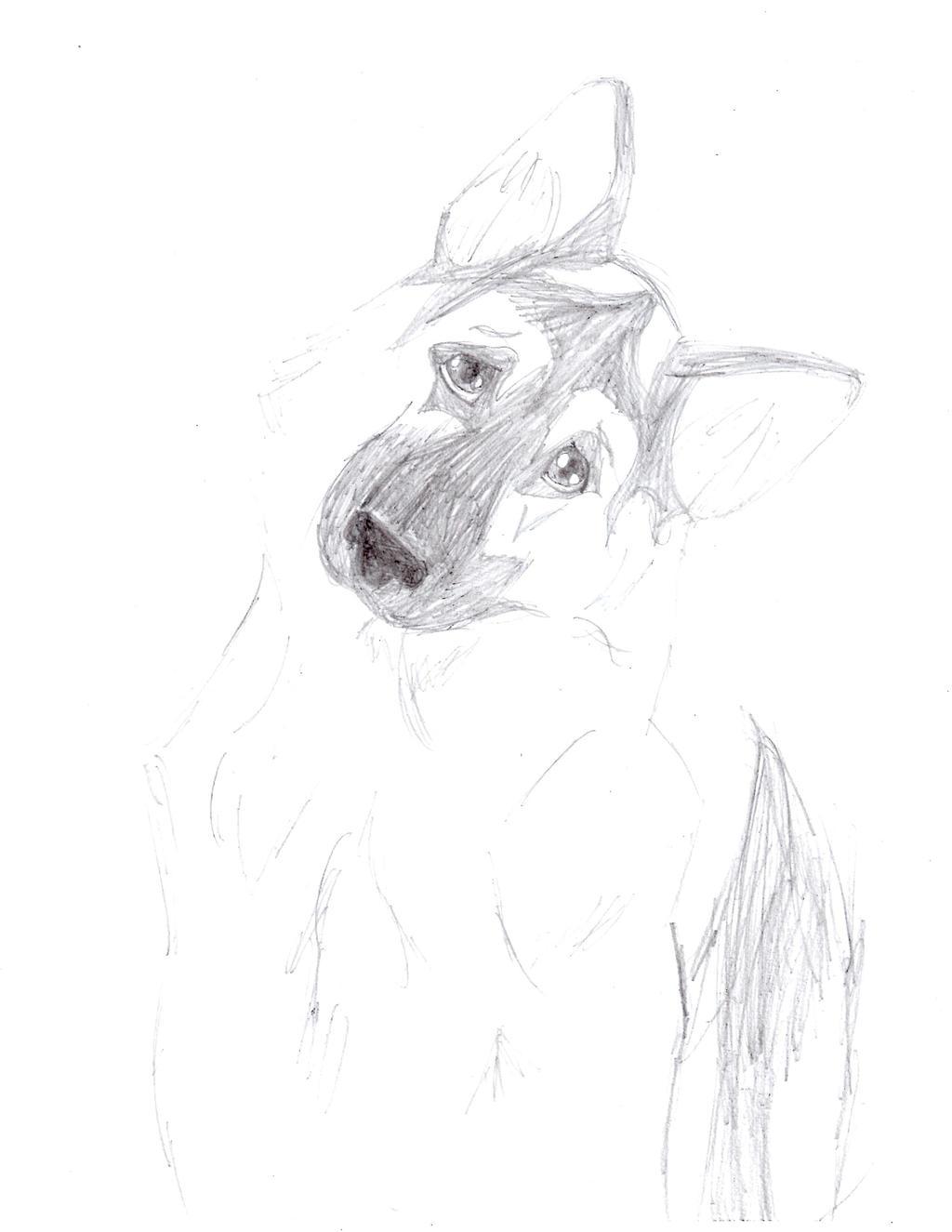 Confused German Shepherd by FieryCreator on DeviantArt