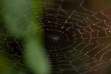 Web by TheLoneSeeker