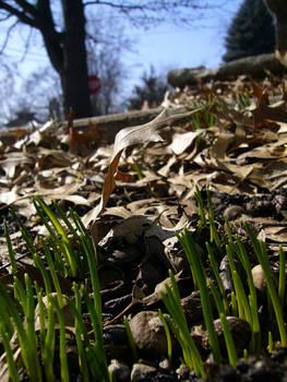 Spring Stock 8