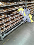 Derpy Found The Muffin Section