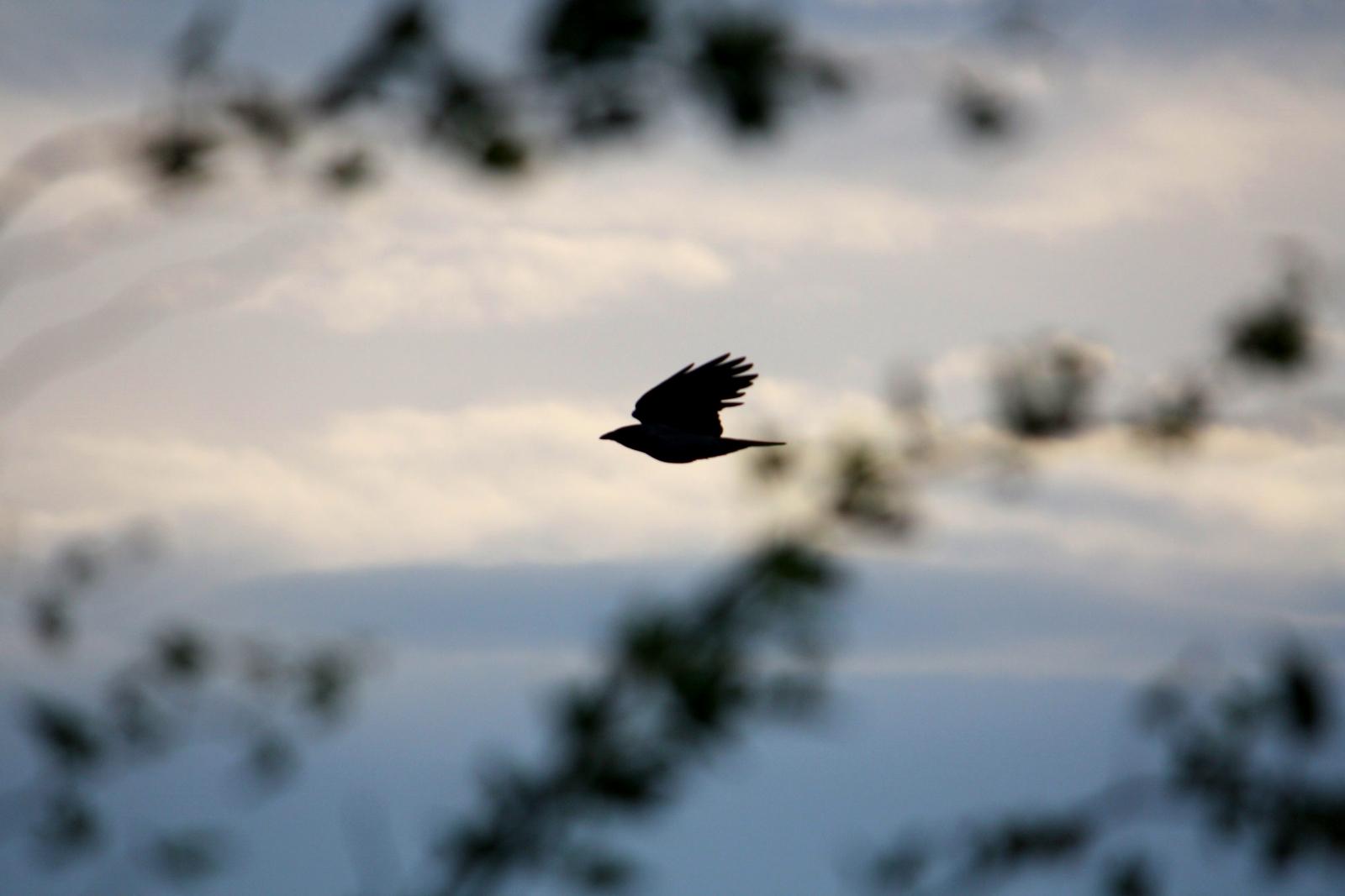 bird-like Shape or shape-Like Bird? by LoveForDetails