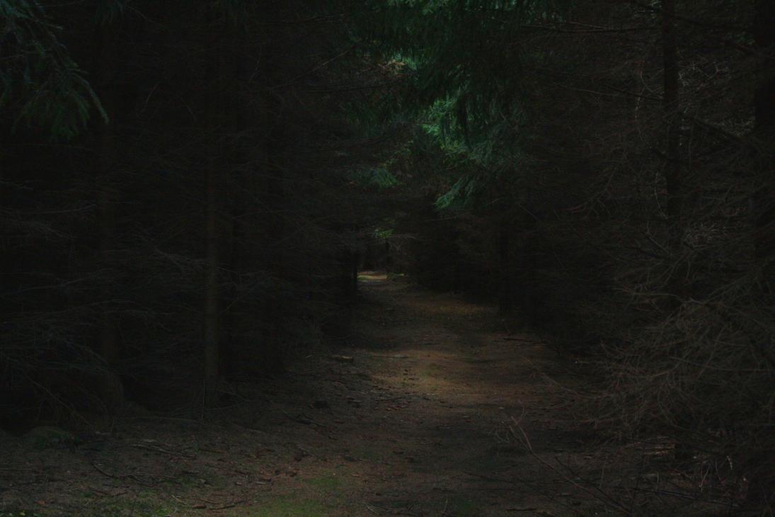 Dark Forest II by LoveForDetails