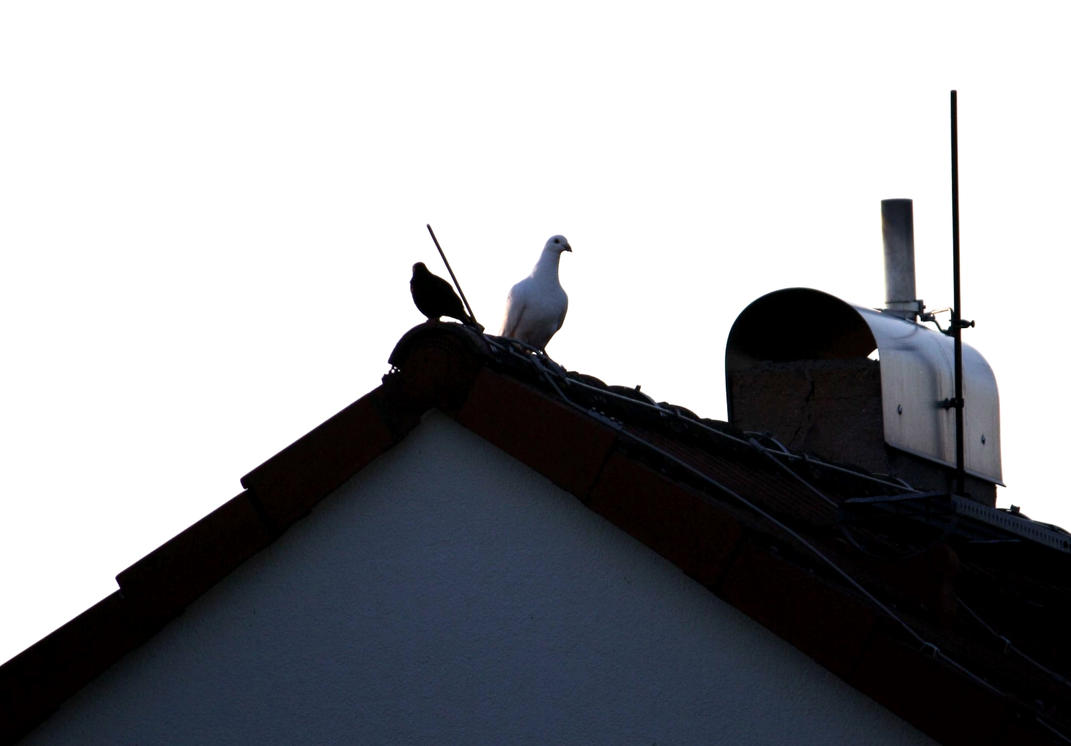 Two Birds at the roof by LoveForDetails