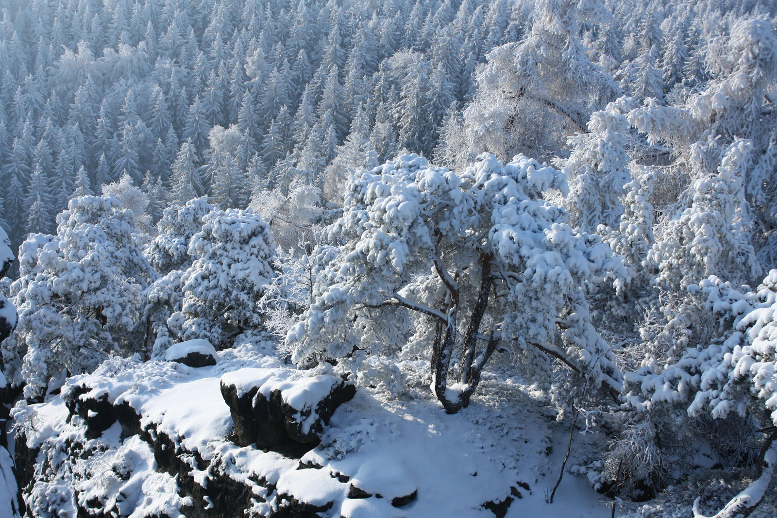 snowed stones and trees by LoveForDetails