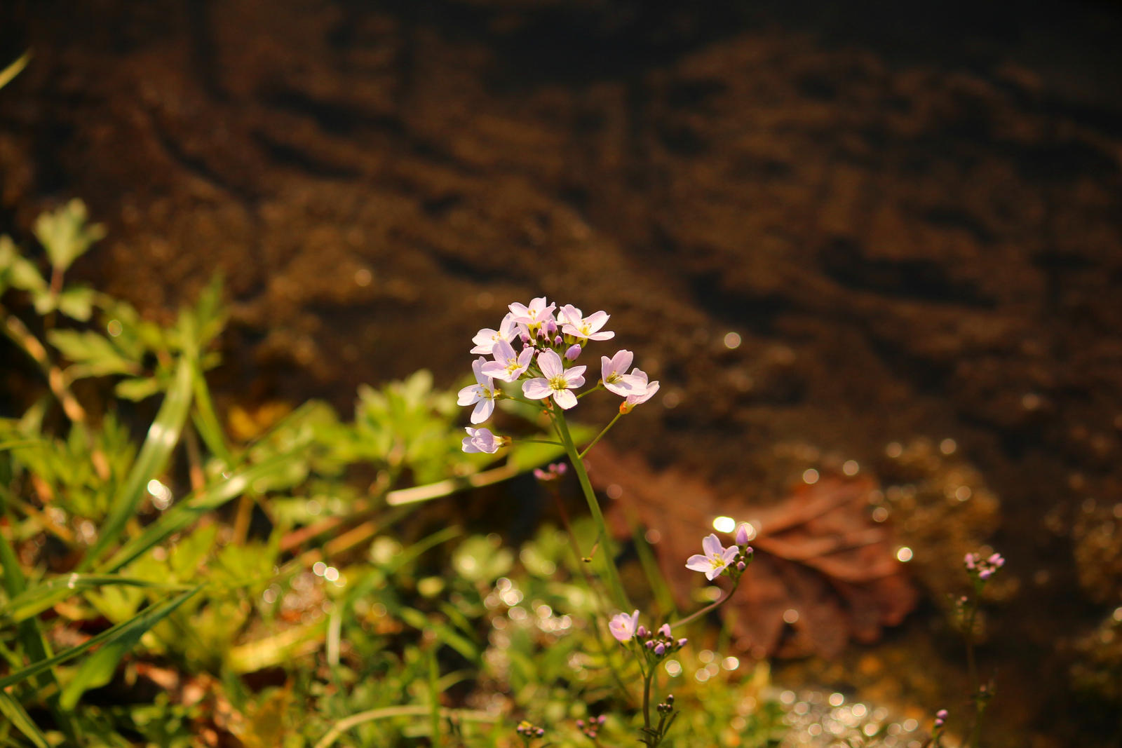 pink Spring Flower by LoveForDetails