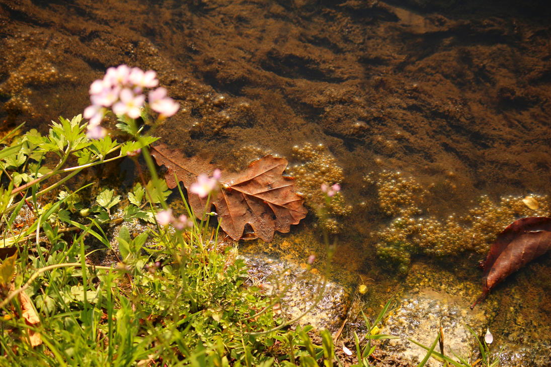 Old leaf in the river by LoveForDetails