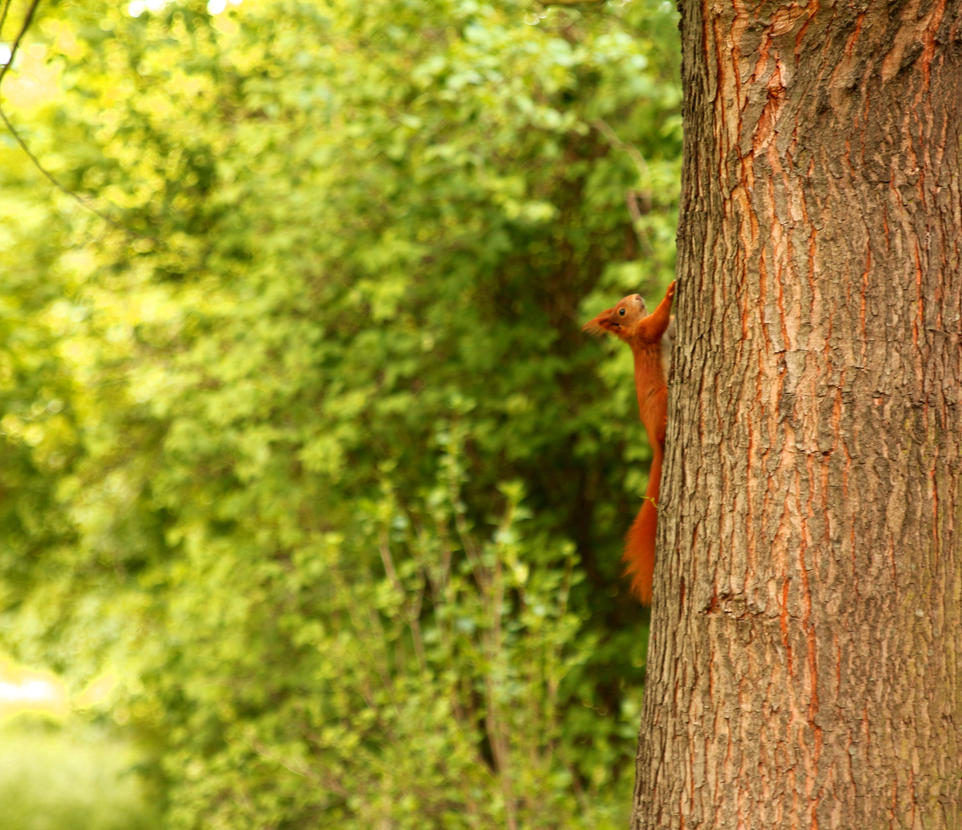 Squirrel running up a tree by LoveForDetails