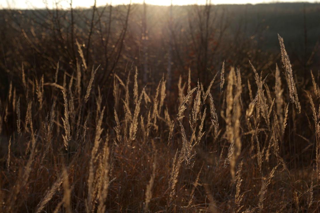 Gras in Sundown II by LoveForDetails