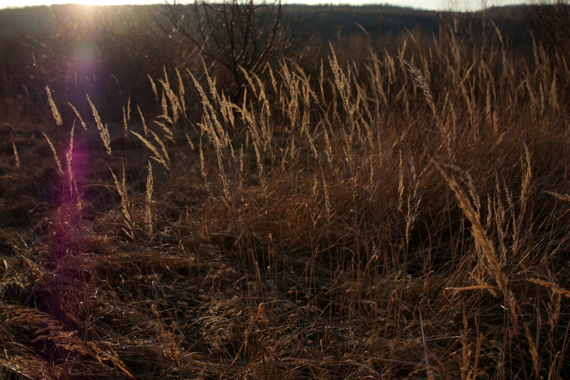 Gras in Sundown III by LoveForDetails