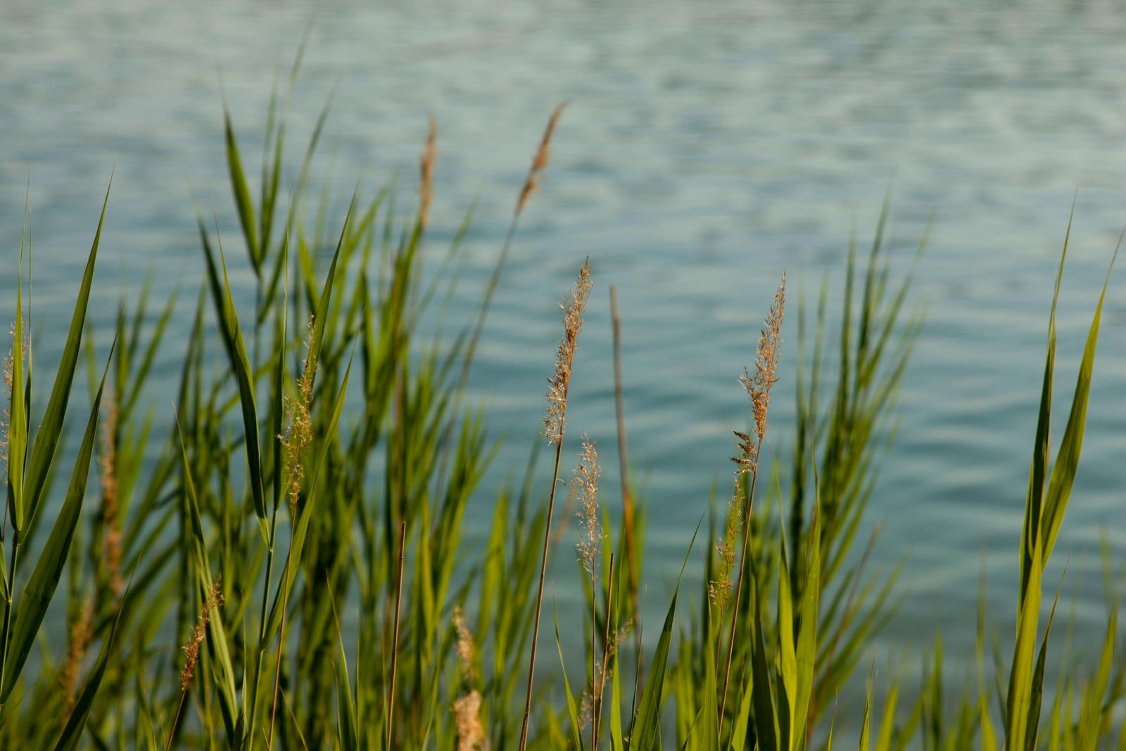grass at the sea by LoveForDetails