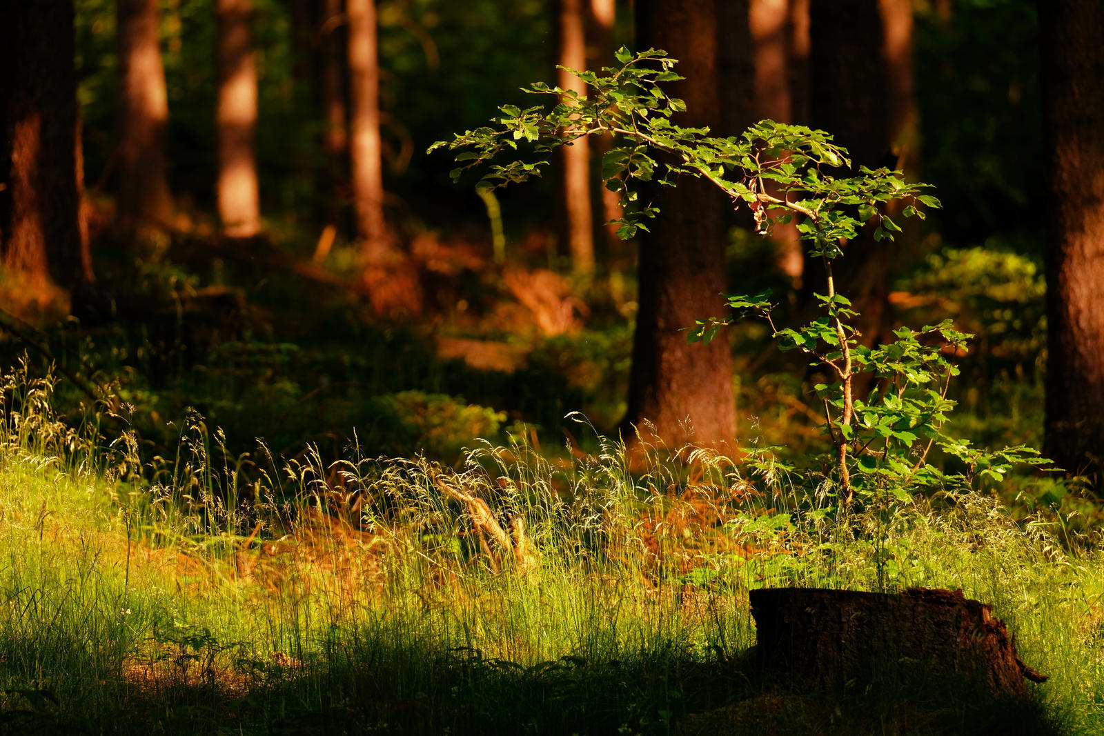 Forest in Detail by LoveForDetails