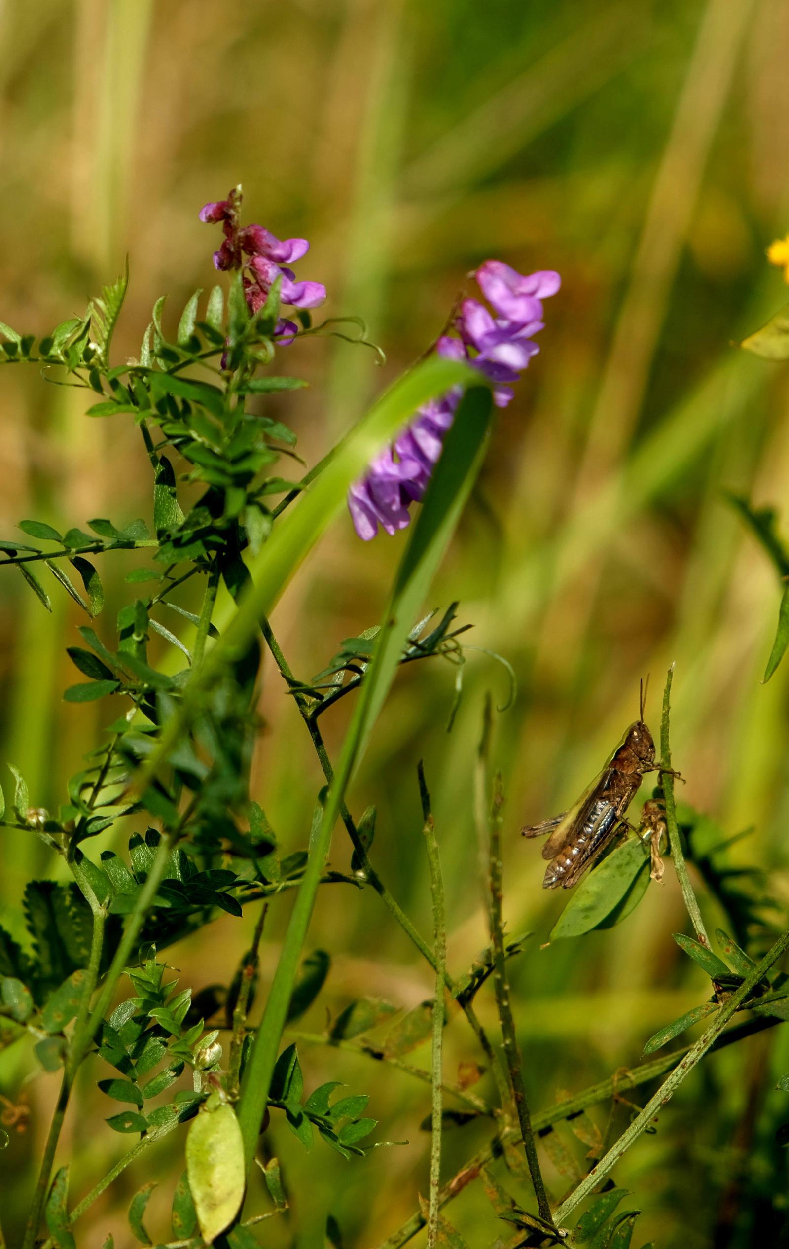Grasshopper by LoveForDetails