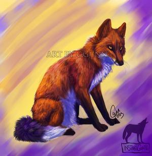 Fox of Color