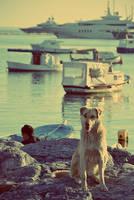 Stray Dog by photoozgur