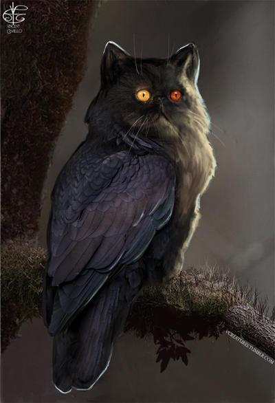 Owl Cat By Vincent Covielloart On Deviantart