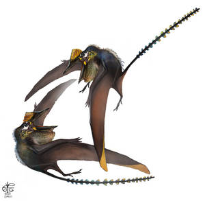 Pterorhynchus