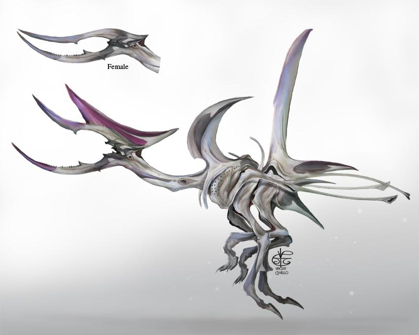 Sword Bills by Vincent-Covielloart