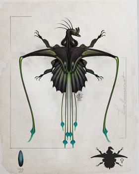 Black Orchid Jewel Drake