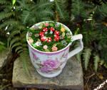 Fairy Garden in a Teacup by FeynaSkydancer