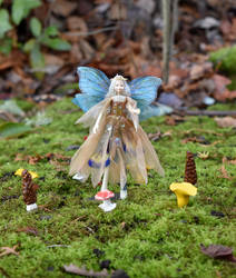 Titiana in a Fairyring