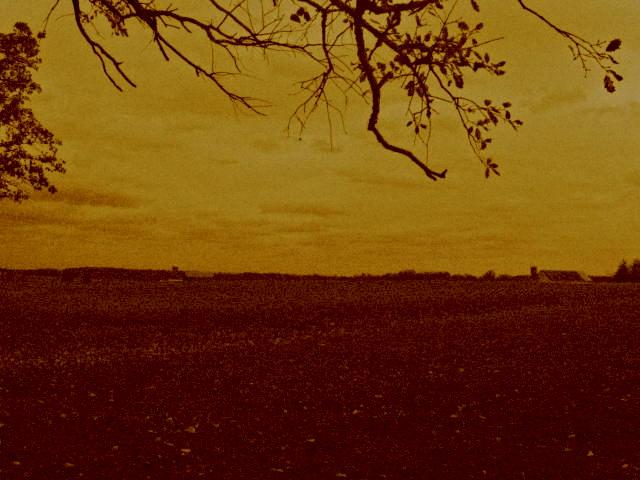 field by prettypunkae